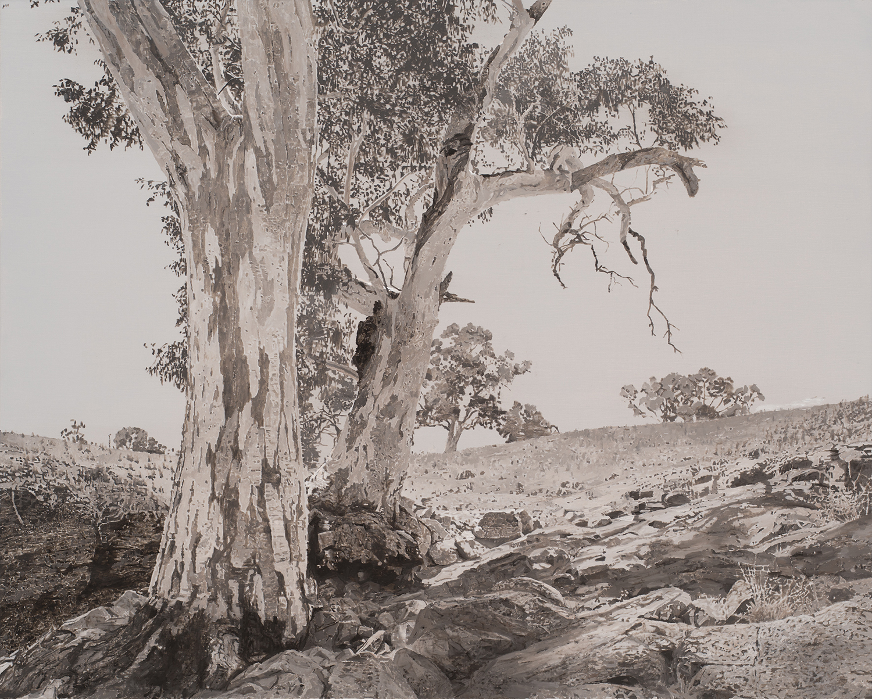 Eucalyptus camaldulensis_6