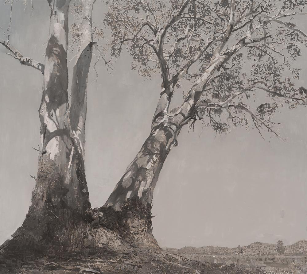 Eucalyptus Camaldulensis 5 122x137cm 2017